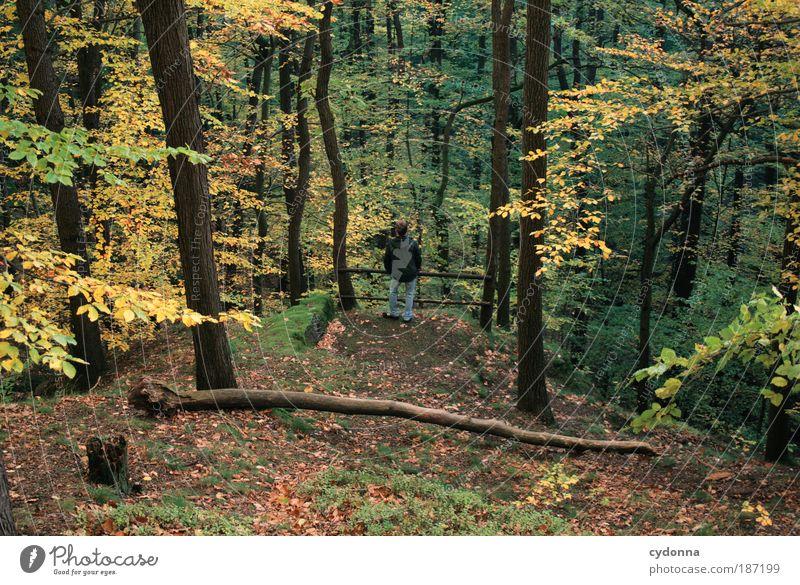 Ein Männlein steht im Walde ... Leben harmonisch Erholung ruhig Mensch Mann Erwachsene Umwelt Natur Landschaft Herbst Baum Bewegung einzigartig Freiheit Idylle