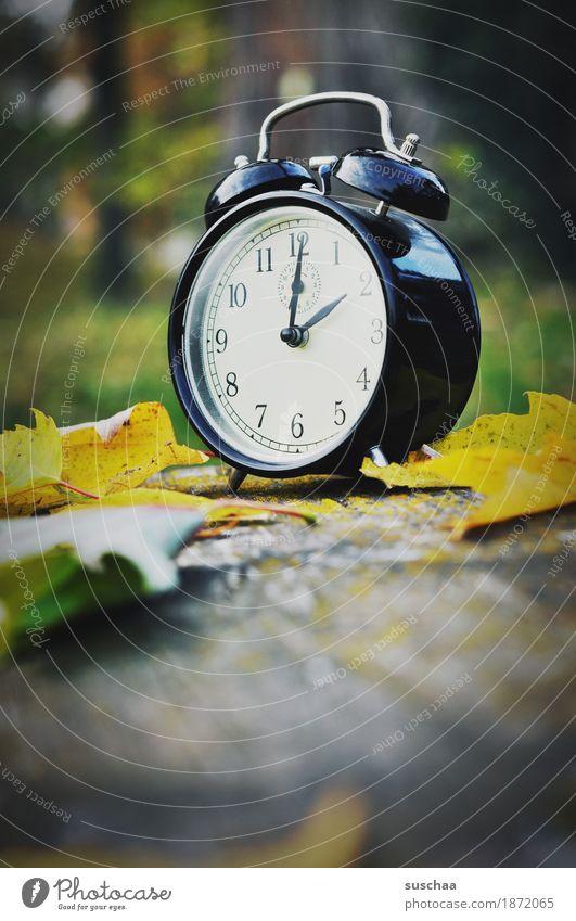 zeit für den winterschlaf Uhr Wecker Zeit Klingel wecken schlafen verschlafen aufstehen uhr stellen weckruf Ziffern & Zahlen Zifferblatt Herbst Außenaufnahme