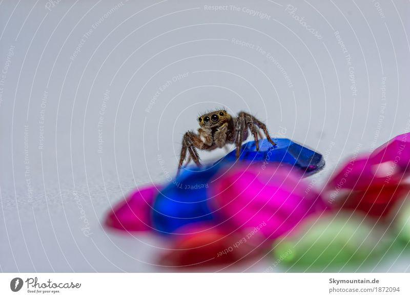 Diamonds are for Spiders only Umwelt Natur Pflanze Tier Wildtier Spinne Tiergesicht 1 blau braun mehrfarbig gelb gold grau grün violett rosa rot schwarz silber