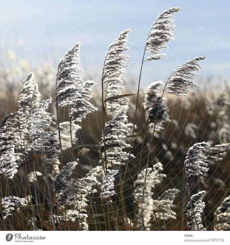 Sucht | Gras satt Ferne Leben Bewegung Küste natürlich Zeit Stimmung Zusammensein Freundschaft träumen elegant authentisch stehen Schönes Wetter