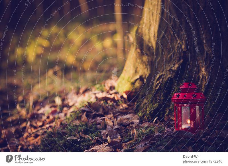 leuchten Kunst Umwelt Natur Landschaft Herbst Winter Pflanze Baum Sträucher Moos Blatt Wald Urwald Stimmung brennen Flamme Laterne Kerze Teelicht Romantik