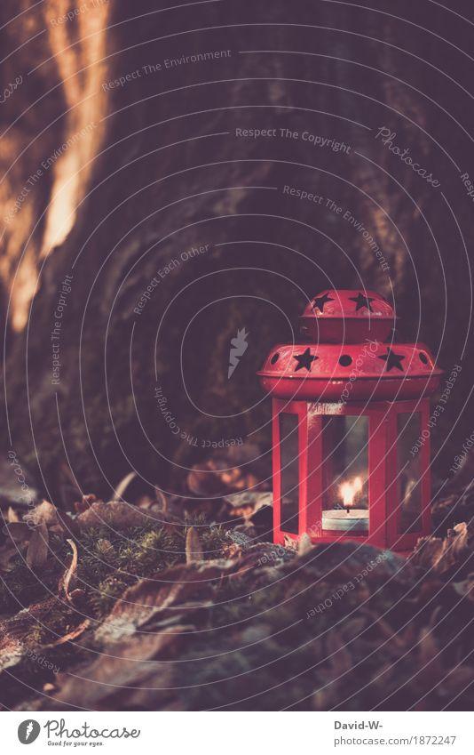 ein Teelicht leuchtet in einer roten Laterne wald baum draußen weihnachtlich leuchten brennen brennt romantsich kerzenschein Romantik strerne sternförmig kälte