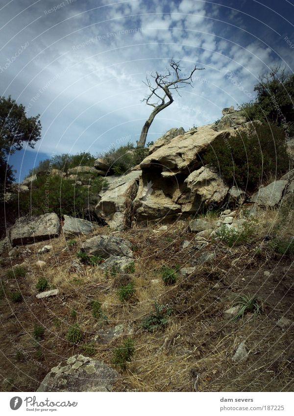 Gegen den Wind Natur Himmel Baum Pflanze Sommer ruhig Wolken Einsamkeit Gras Berge u. Gebirge Landschaft Wetter Horizont Felsen Erde Perspektive