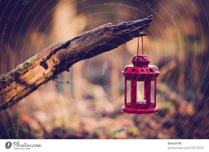 Sterne im Wald Lifestyle Umwelt Natur Landschaft Luft Herbst Winter Klima Wärme Baum leuchten Kerze Stern (Symbol) Laterne hängen Ast Flamme brennen Erholung