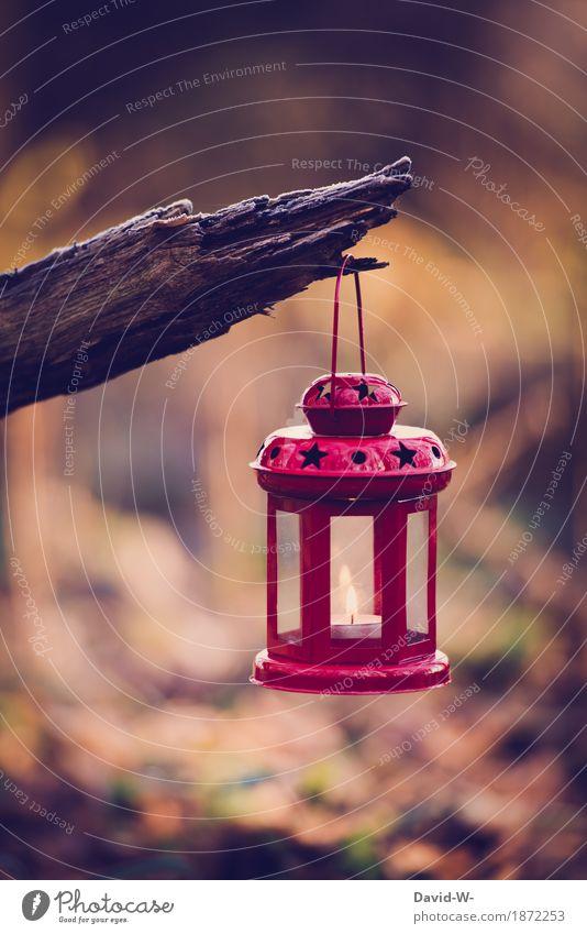 rote Laterne Kunst Umwelt Natur Winter Baum Wald leuchten Kerze Teelicht schön besinnlich Weihnachten & Advent Stimmung Freude Vorfreude Dekoration & Verzierung