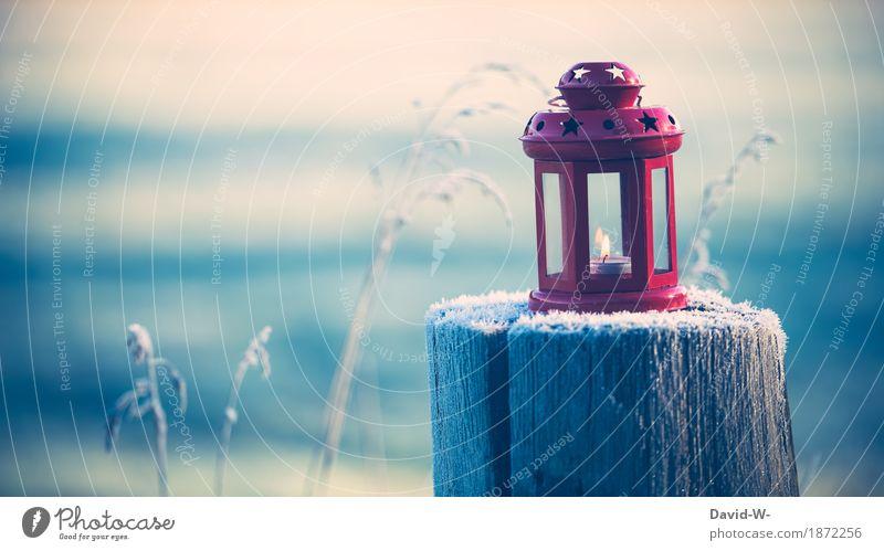 Winterzeit Stil Mensch Kunst Umwelt Natur Landschaft Schönes Wetter Pflanze leuchten Laterne Kerze Teelicht rot Stern (Symbol) schön stimmig kalt Frost Eis