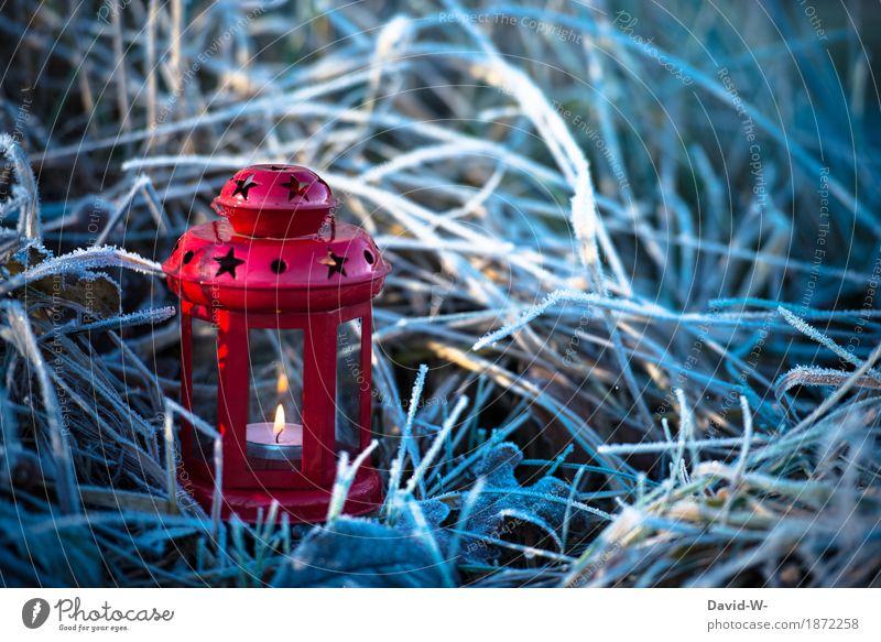 frostig Natur Pflanze Weihnachten & Advent schön Landschaft Winter Umwelt Wärme kalt Religion & Glaube Wiese Gras Schnee Kunst leuchten Feld