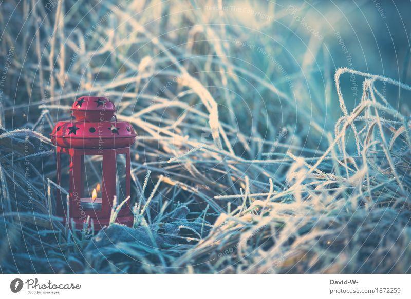 kleine rote Laterne Weihnachten & Advent Kunst Kunstwerk Umwelt Natur Landschaft Winter Schönes Wetter schlechtes Wetter Eis Frost Schnee Pflanze Gras Sträucher