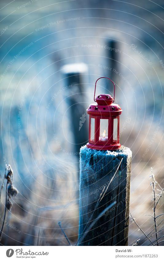 wärme ins kalte tragen Natur blau Weihnachten & Advent schön Landschaft rot Winter Umwelt Herbst Schnee Holz Kunst Feste & Feiern leuchten Eis