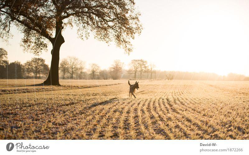 draußen unterwegs Natur Hund Ferien & Urlaub & Reisen Sonne Baum Tier Freude Ferne Umwelt kalt Wiese Lifestyle Spielen Freiheit Freizeit & Hobby frei