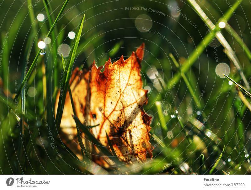 Versteckt im Gras Natur Wasser Pflanze Blatt Herbst Wiese Park Landschaft hell glänzend Wetter Umwelt Wassertropfen nass nah