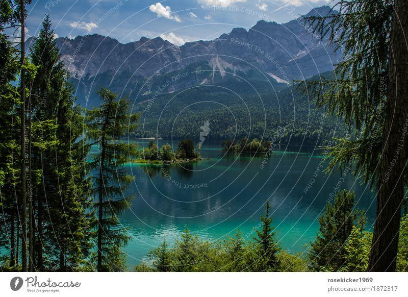 Eibsee Natur Ferien & Urlaub & Reisen Pflanze Sommer schön Wasser Landschaft Berge u. Gebirge Umwelt Glück Freiheit Schwimmen & Baden See Freizeit & Hobby