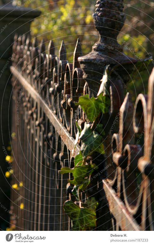 umzäunt grün Pflanze Herbst Garten Park braun Wachstum Sicherheit Häusliches Leben Romantik Spitze Schutz Zaun Schönes Wetter Nostalgie stachelig
