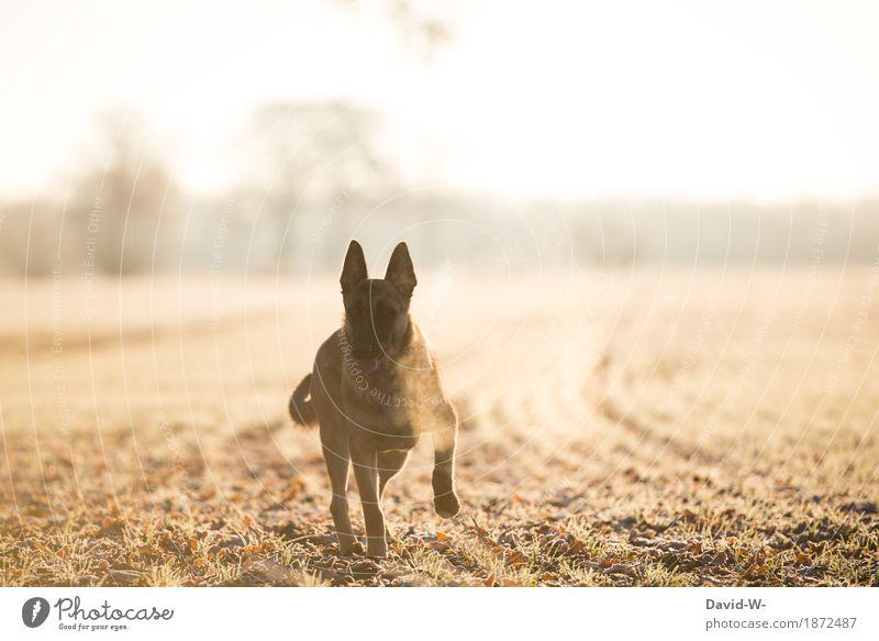 mit dem Hund an einem kühlen Wintermorgen in der Natur unterwegs draußen Acker Sonnenlicht Sonnenuntergang Sonnenstrahlen gelb beobachten Blick in die Kamera