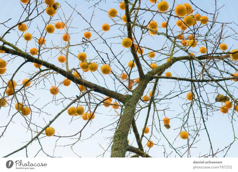 ich habe schon mal den Baum geschmückt Weihnachten & Advent blau Winter gelb Herbst Natur Pflanzenteile Umwelt Zeit Weihnachtsbaum Ast Licht skurril