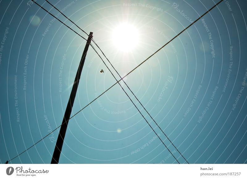 |X Sinnesorgane Freiheit Kabel Telekommunikation Himmel Wolkenloser Himmel Schönes Wetter Vogel fliegen blau schwarz Symmetrie Sonnenfleck Hochspannungsleitung