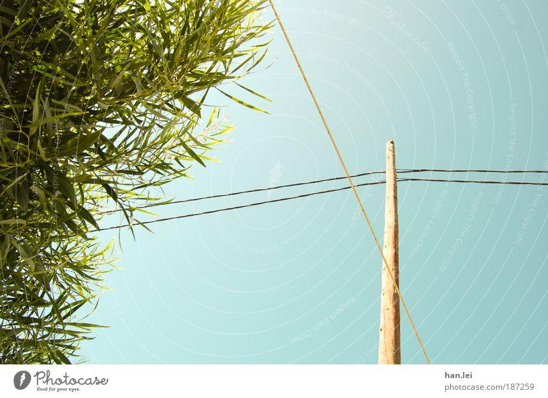 Green & Blue Farbfoto Außenaufnahme Menschenleer Textfreiraum rechts blau grün Pflanze Baum Sträucher Blatt Strommast Kabel Holz Blauer Himmel Schönes Wetter