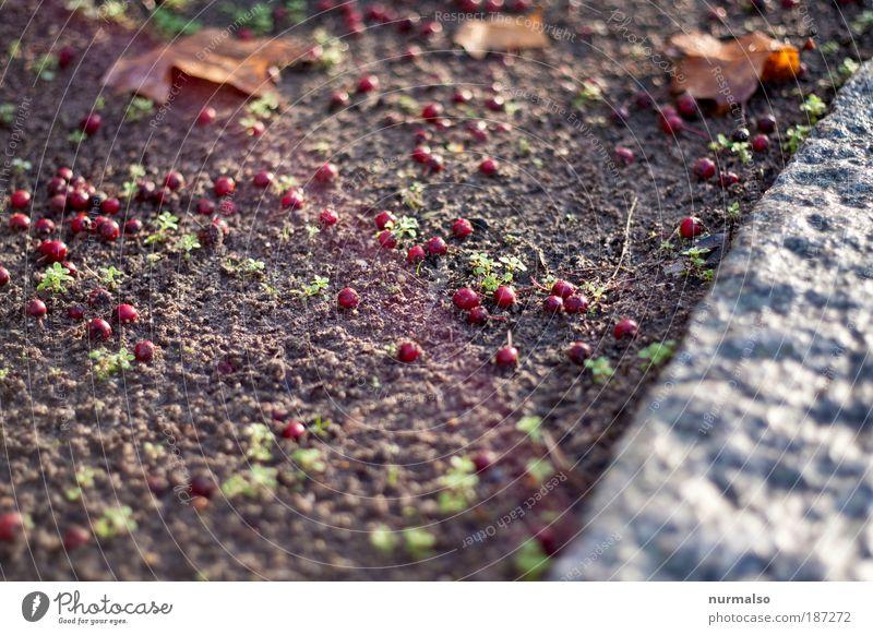 Weihnachtsmannperlen Natur Pflanze Blatt Winter Straße Herbst Kunst Stein Sand Frucht Park liegen Erde authentisch Kommunizieren einfach