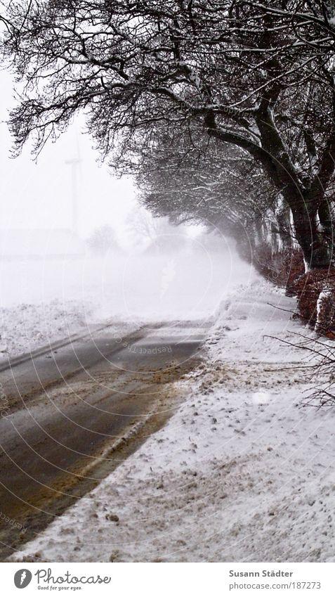 Vestergade Winter Eis Frost Schnee Wald Weisheit Schneewehe Straße Dreck Dänemark kalt Spaziergang schlechte Sicht Winterurlaub Außenaufnahme Textfreiraum links