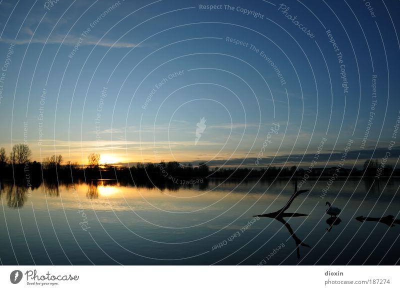 blaue Stunde - Prolog Natur Wasser Himmel Baum Sonne blau ruhig Wolken Tier Erholung See Landschaft Vogel Romantik Gelassenheit Wildtier