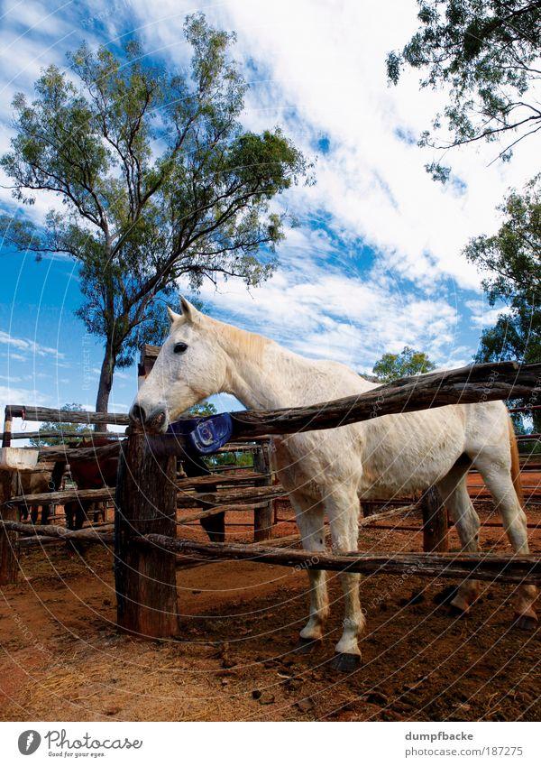 Pferdefarm Natur weiß Ferien & Urlaub & Reisen Tier Freizeit & Hobby Bauernhof Weide Zaun Säugetier Australien Reiten Gehege Outback Queensland