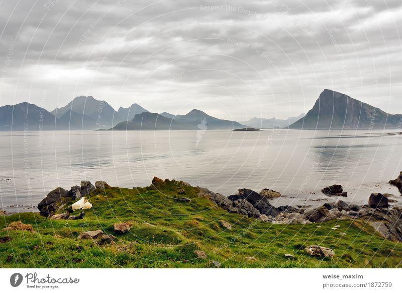 Norwegen Lofoten-Inseln im Dunst. Bewölkter nordischer Tag. Himmel Natur Ferien & Urlaub & Reisen Sommer grün Meer Landschaft Wolken Strand Berge u. Gebirge