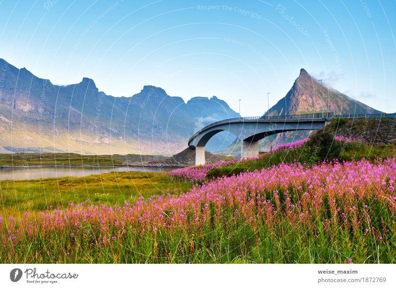 Norwegen sonnigen Sommertag. Brücke über den Fjord Himmel Natur Ferien & Urlaub & Reisen blau Blume Meer Landschaft rot Ferne Berge u. Gebirge Architektur Wiese