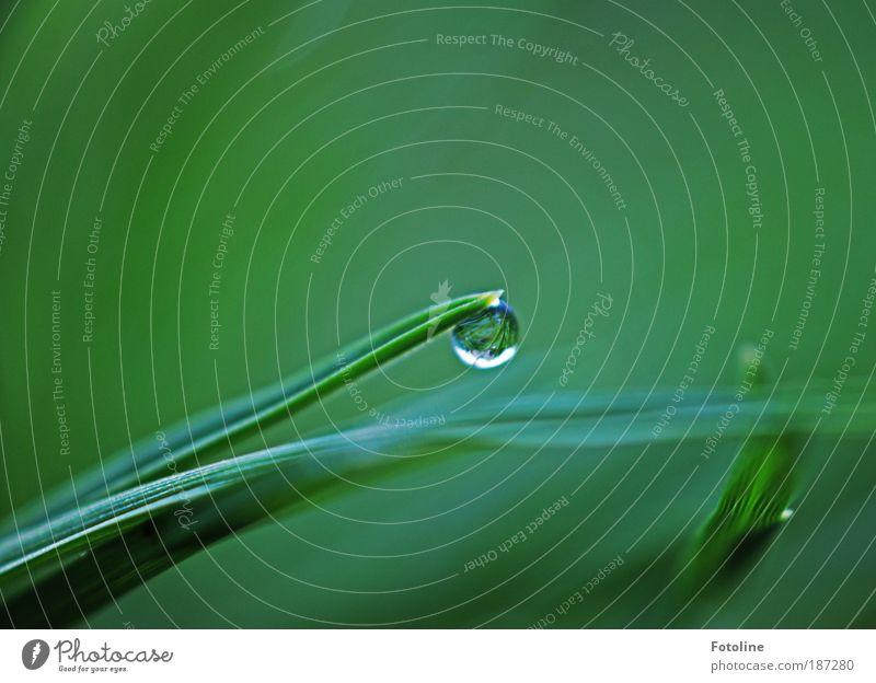 Glaskugel Umwelt Natur Landschaft Pflanze Urelemente Wasser Wassertropfen Frühling Sommer Herbst Klima Wetter Schönes Wetter Regen Gras Flüssigkeit hell kalt