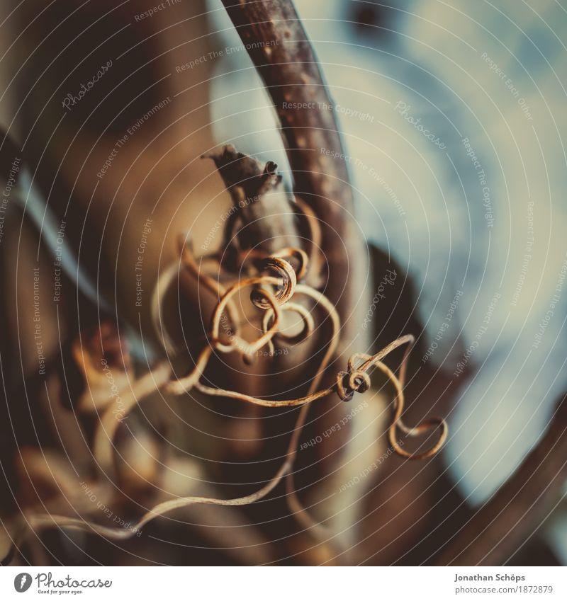 Makrospaziergang III Umwelt Natur ästhetisch Korkenzieher-Weide Makroaufnahme braun rund gekrümmt einzeln Nahaufnahme Detailaufnahme Außenaufnahme Schaffung