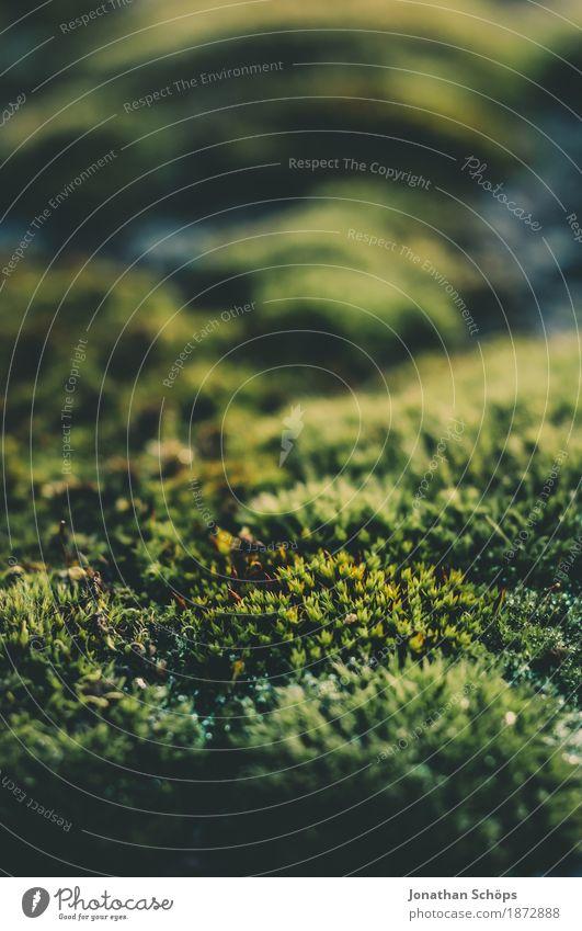 Ohne Moos nix los III Umwelt Natur Pflanze Garten Park Wiese Wald ästhetisch Makroaufnahme Detailaufnahme Moosteppich Außenaufnahme schön weich Erholung ruhig