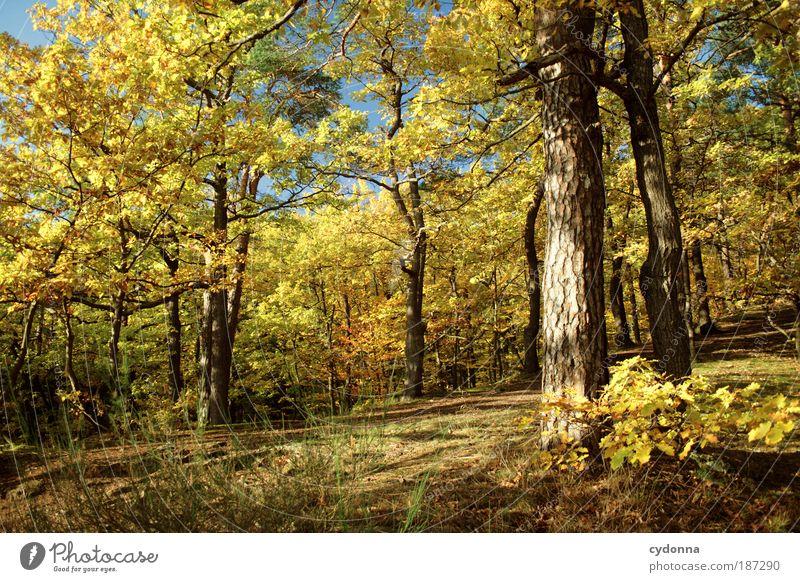 Herbstfarben Natur schön Baum ruhig Wald Farbe Erholung Leben Freiheit Herbst Landschaft Umwelt Wege & Pfade träumen Zeit einzigartig