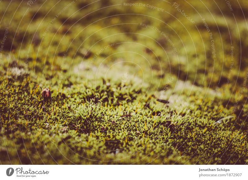 Ohne Moos nix los I Umwelt Natur Pflanze Garten Park Wiese Wald ästhetisch Makroaufnahme Detailaufnahme klein winzig Moosteppich grün Außenaufnahme schön weich