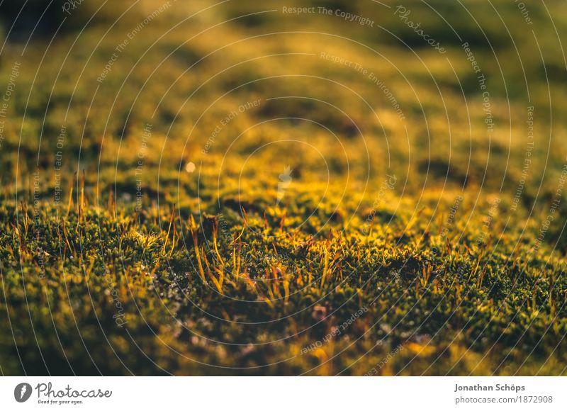 Ohne Moos nix los V Umwelt Natur Pflanze Garten Park Wiese Wald ästhetisch Makroaufnahme Detailaufnahme Moosteppich Außenaufnahme schön weich Erholung ruhig