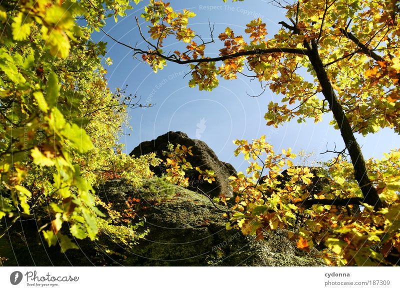 Gipfel Leben Wohlgefühl Erholung ruhig Umwelt Natur Wolkenloser Himmel Herbst Baum Blatt Wald Felsen Berge u. Gebirge Entschlossenheit Erwartung Idylle