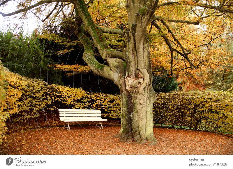Parkbank Natur schön Baum ruhig Blatt Einsamkeit Leben Erholung Herbst Gefühle Tod träumen Bank Wege & Pfade Park Landschaft