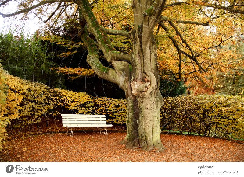 Parkbank Natur schön Baum ruhig Blatt Einsamkeit Leben Erholung Herbst Gefühle Tod träumen Bank Wege & Pfade Landschaft