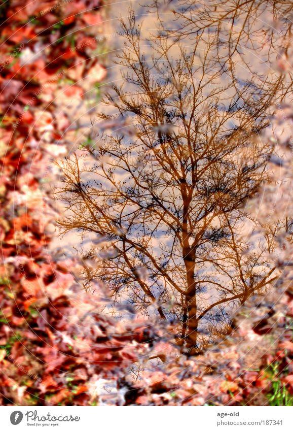 Herbstlich gerahmt Himmel Natur Wasser Pflanze Baum Blatt Landschaft Wald Erholung Umwelt Herbst Gras Glück Traurigkeit träumen Stimmung
