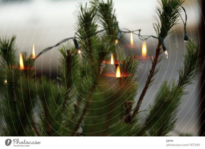 Advent, Advent..... Weihnachten & Advent Garten Hoffnung Kerze Dekoration & Verzierung