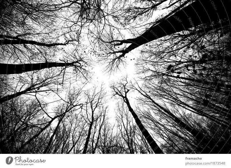 dark forest Umwelt Natur Landschaft Pflanze Himmel Herbst Baum Wald Holz ästhetisch authentisch dunkel gigantisch gruselig hoch nachhaltig stark Gefühle ruhig