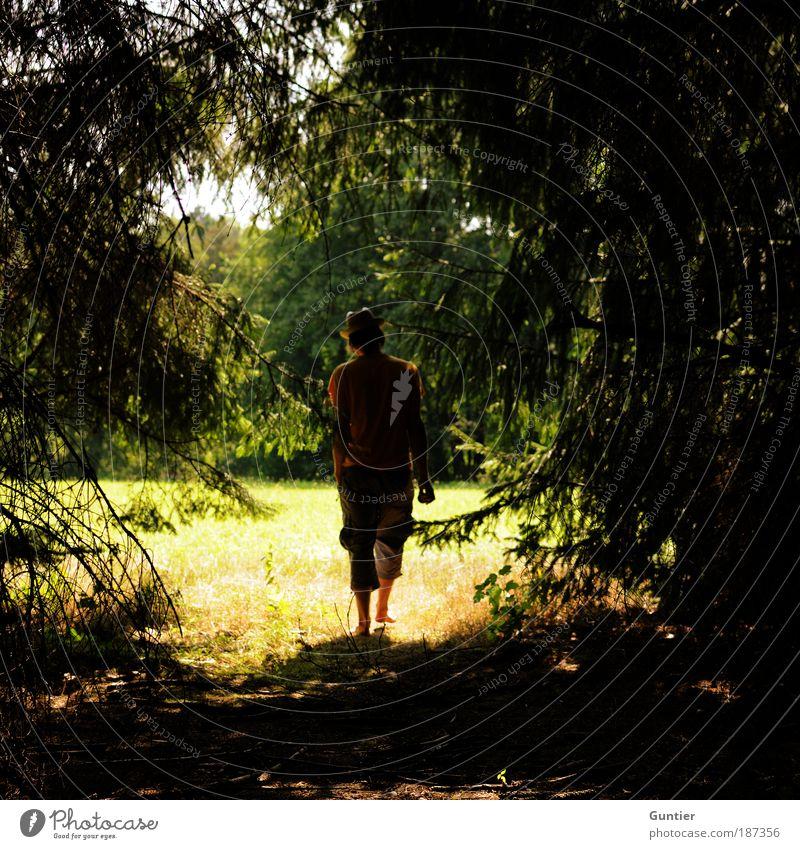 Sweet Summer Days Mensch Mann Natur Jugendliche Himmel Baum grün blau Pflanze Sommer schwarz gelb Wald Leben Wiese Gefühle
