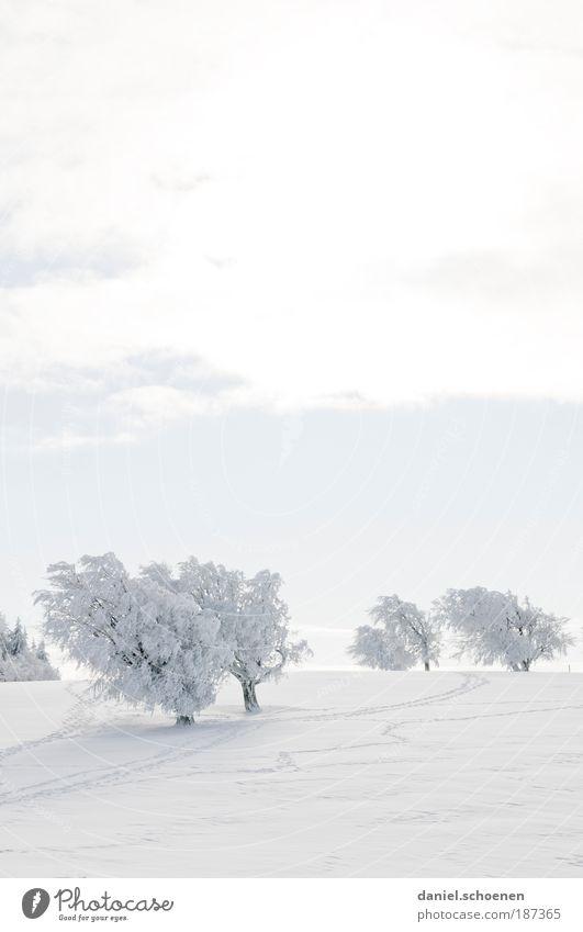 Hochformatschauinsland Ferien & Urlaub & Reisen Tourismus Winter Schnee Winterurlaub Wintersport Landschaft Klima Schönes Wetter Eis Frost hell weiß