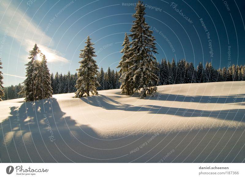 Querformatschauinsland Natur Baum Winter Ferien & Urlaub & Reisen ruhig Wald Schnee Erholung Landschaft Eis Umwelt Frost Klima Schönes Wetter Licht