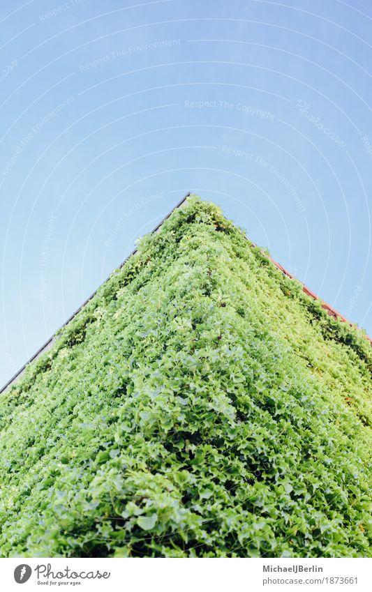 Haus mit grünen Pflanzen überwuchert Natur Frühling Blatt Grünpflanze Kletterpflanzen Menschenleer Bauwerk Gebäude Architektur Fassade natürlich blau