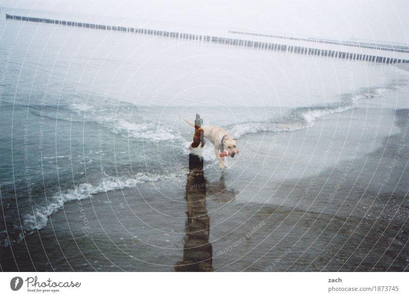 Seehund Natur Hund Wasser Meer Landschaft Tier Strand Herbst Küste Spielen grau träumen Nebel Wellen Ostsee Haustier