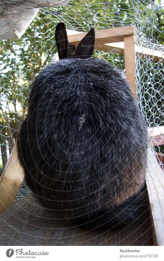 Meister Lampe schmollt grau Rücken Hase & Kaninchen rückwärts