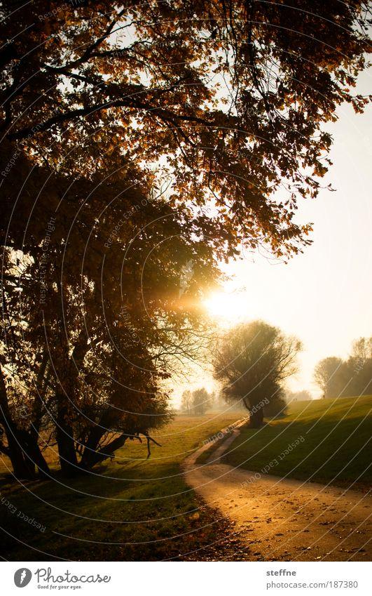 Wärme Natur Landschaft Herbst Schönes Wetter Baum Park Denken Erholung träumen Spaziergang Farbfoto Außenaufnahme Menschenleer Morgendämmerung Tag Dämmerung