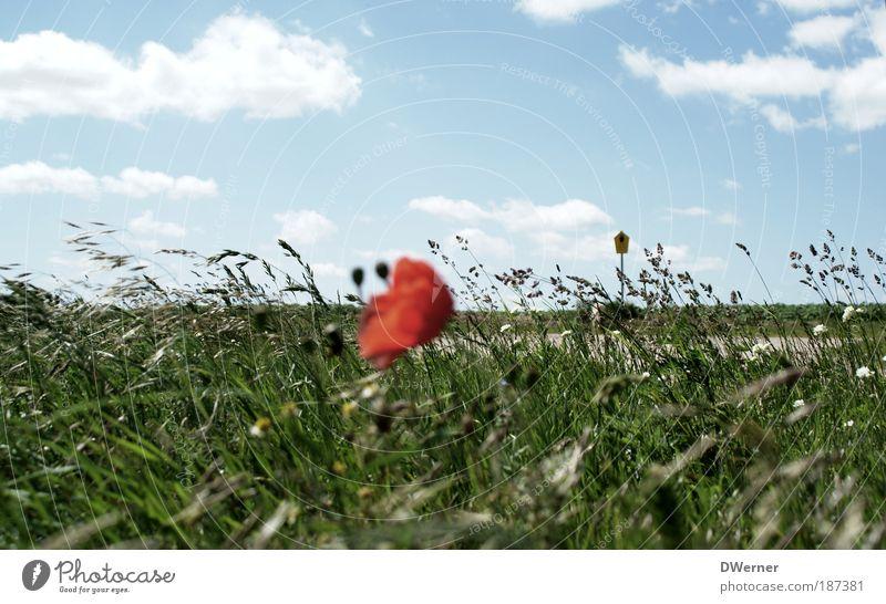 letzte Mohnblume 2009 Natur schön Himmel Sonne Blume grün blau Pflanze rot Sommer Wolken Wiese Gefühle Gras Landschaft Tanzen