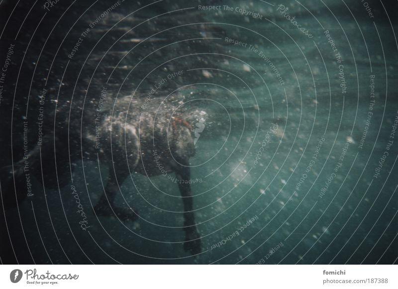 yedikonuk Hund tauchen Selbstbeherrschung Leben Ausdauer Angst dunkel ungewiss Extase Sommer Unterwasseraufnahme Lomografie Reflexion & Spiegelung