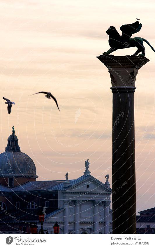 Löwe in Venedig bei Abenddämmerung Freiheit Städtereise Skulptur Landschaft Sonnenaufgang Sonnenuntergang Italien Europa Hafenstadt Menschenleer Haus Bauwerk