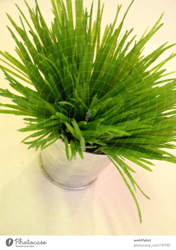 Das grüne Etwas obskur Topf Kunstblume